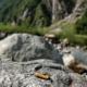 Giftige Zigarettenstummeln in den Hohen Tauern